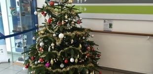 Christmas tree in reception